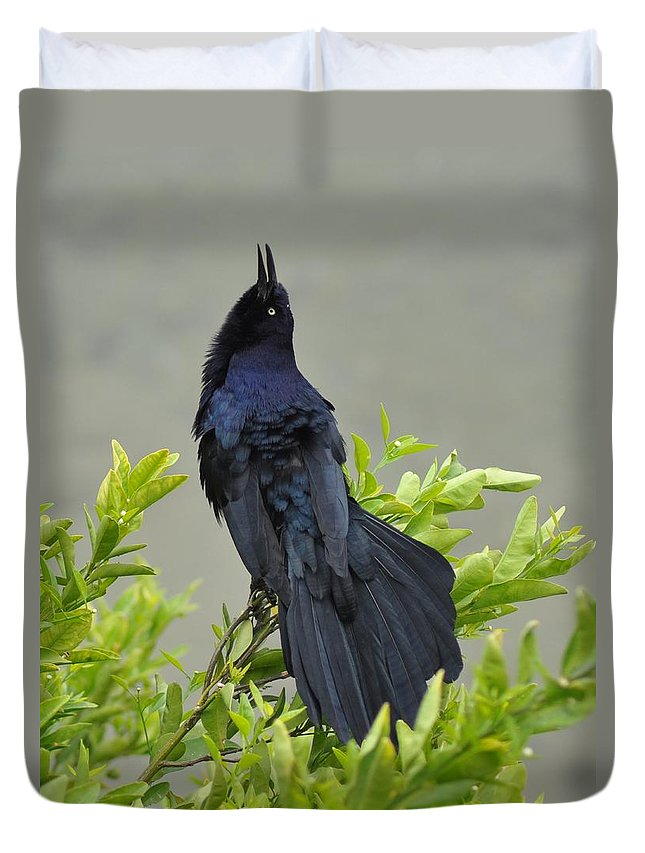 Bird Duvet Cover featuring the photograph Serenade by Patricia Quandel