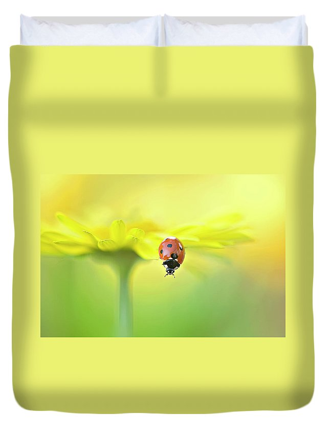 Buckinghamshire Duvet Cover featuring the photograph Seven Spot Ladybird On Yellow Flower by Jacky Parker Photography
