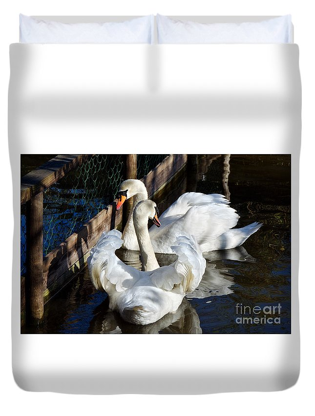 Abbotsbury Swannery Duvet Cover featuring the Shadowed Rendezvous by Susie Peek