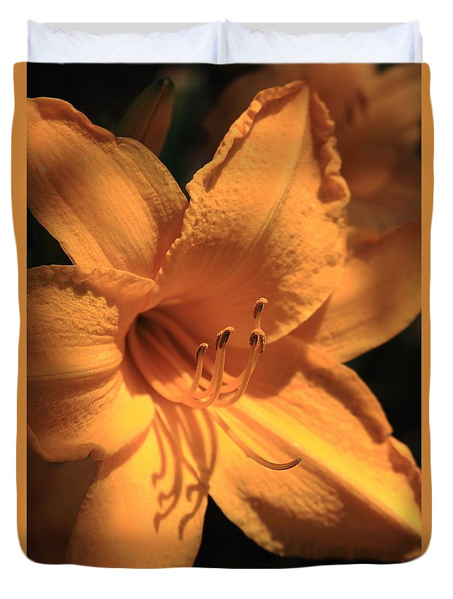 Flower Duvet Cover featuring the photograph Day Lily Shadows by Reid Callaway