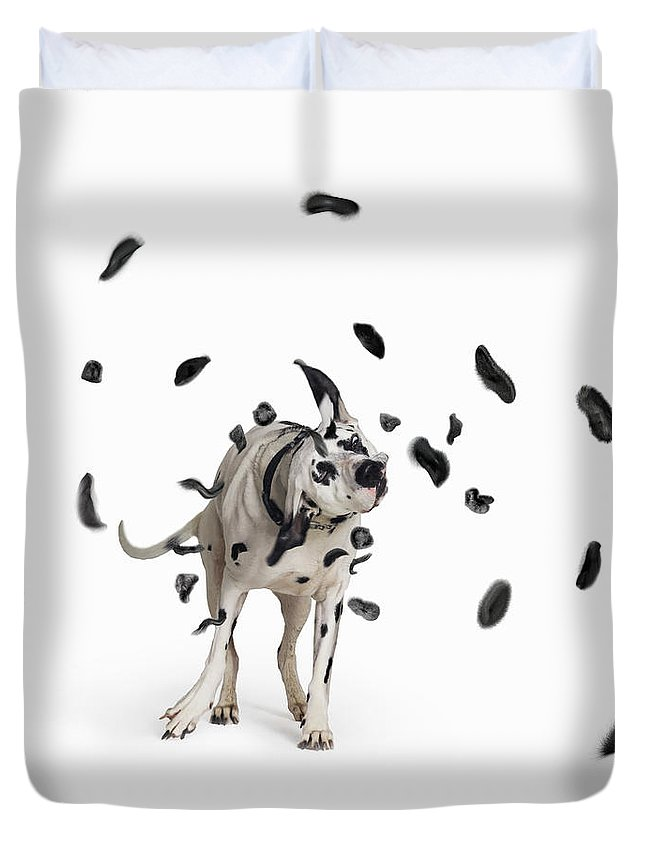 Pets Duvet Cover featuring the photograph Shake The Spots Off by Gandee Vasan