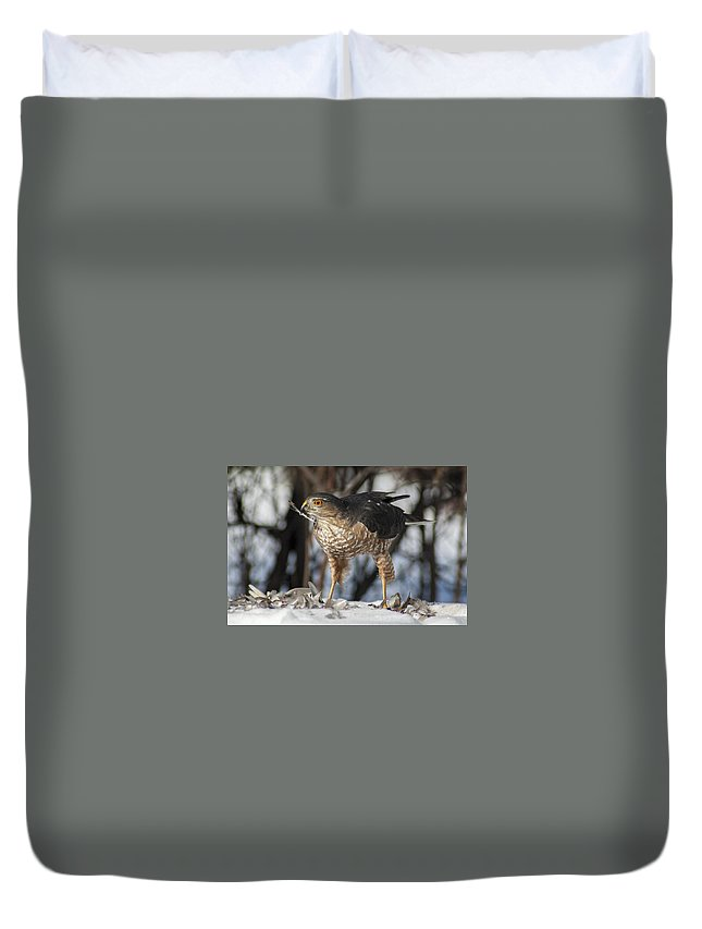 Hawk Duvet Cover featuring the photograph Sharp-shinned Hawk And Feather by Richard Kitchen