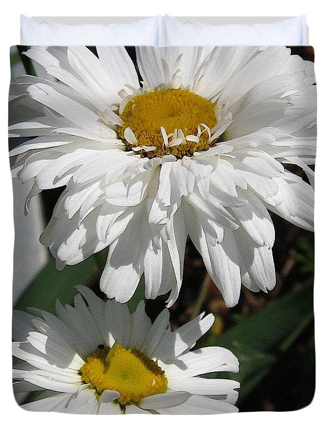Mccombie Duvet Cover featuring the painting Shasta Daisy Named Paladin by J McCombie