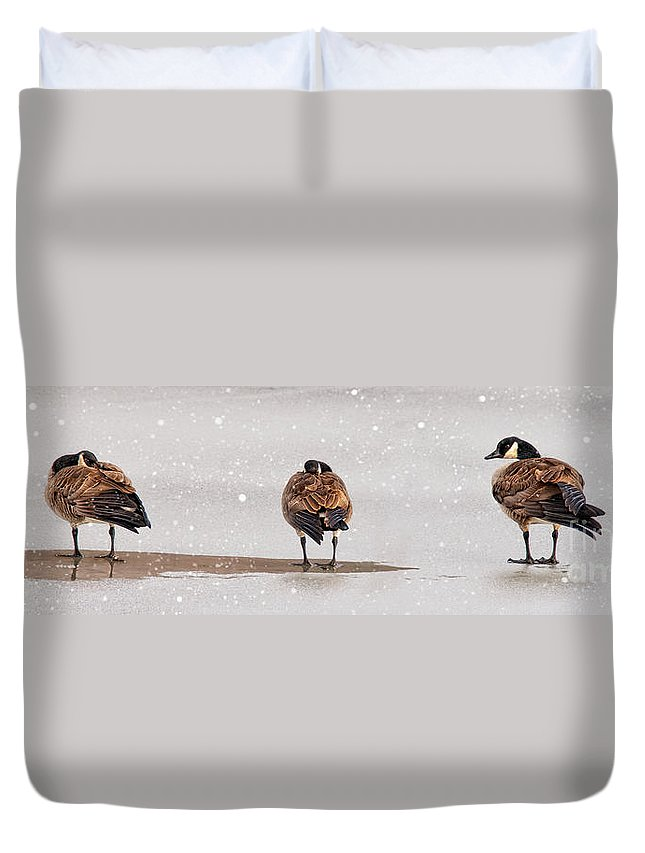 Shawnee State Park Duvet Cover featuring the photograph Shawnee Park Geese by Timothy Flanigan and Debbie Flanigan Nature Exposure