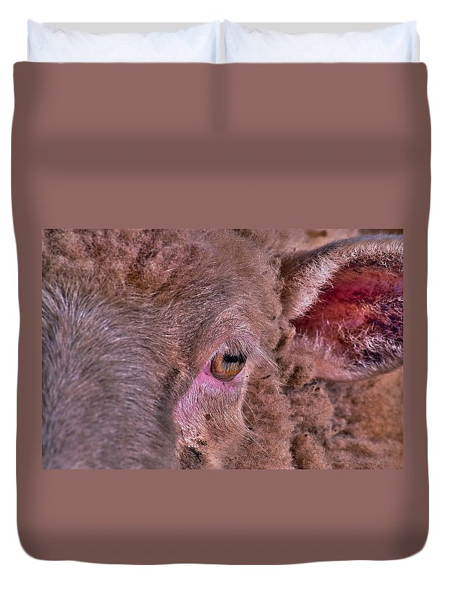 Sheep Duvet Cover featuring the photograph Sheep Close Up 2 by Bill Owen