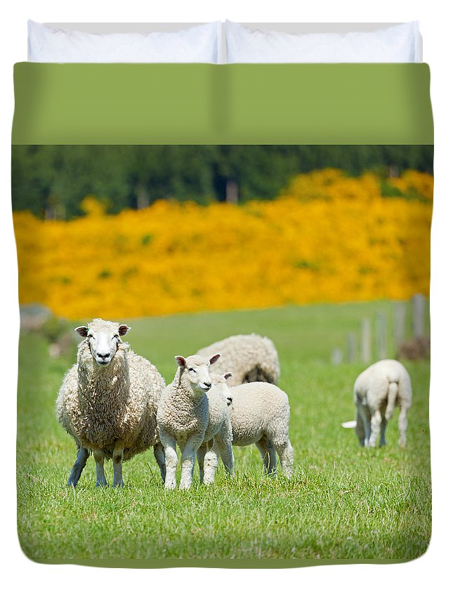Sheep Duvet Cover featuring the photograph Sheep Grazing by Alexey Stiop