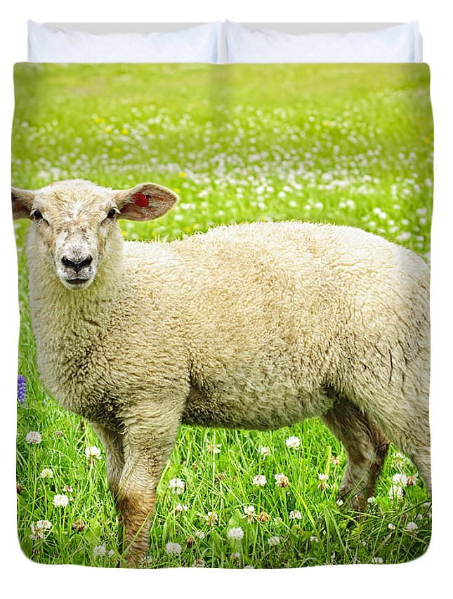 Sheep Duvet Cover featuring the photograph Sheep In Summer Meadow by Elena Elisseeva