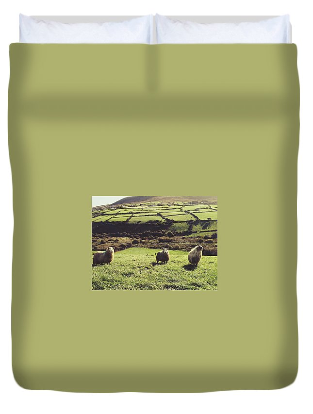 Pets Duvet Cover featuring the photograph Sheep Standing In Field by Thomas Peham / Eyeem