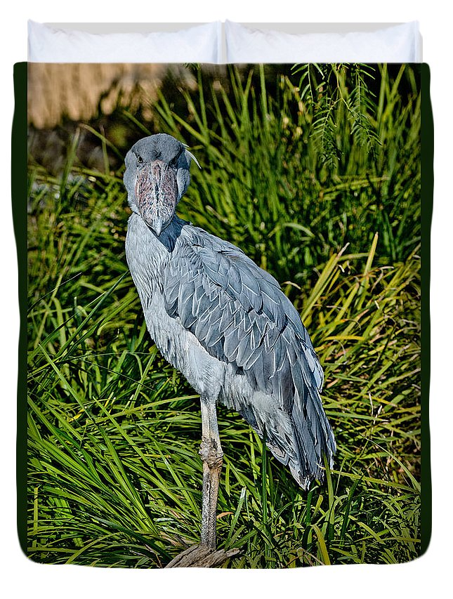 Animal Duvet Cover featuring the photograph Shoebill Stork by Anthony Mercieca