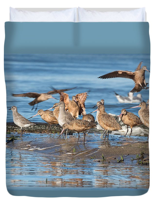 Marbled Godwit Duvet Cover featuring the photograph Shorebirds Flocking At Bodega Bay by Kathleen Bishop