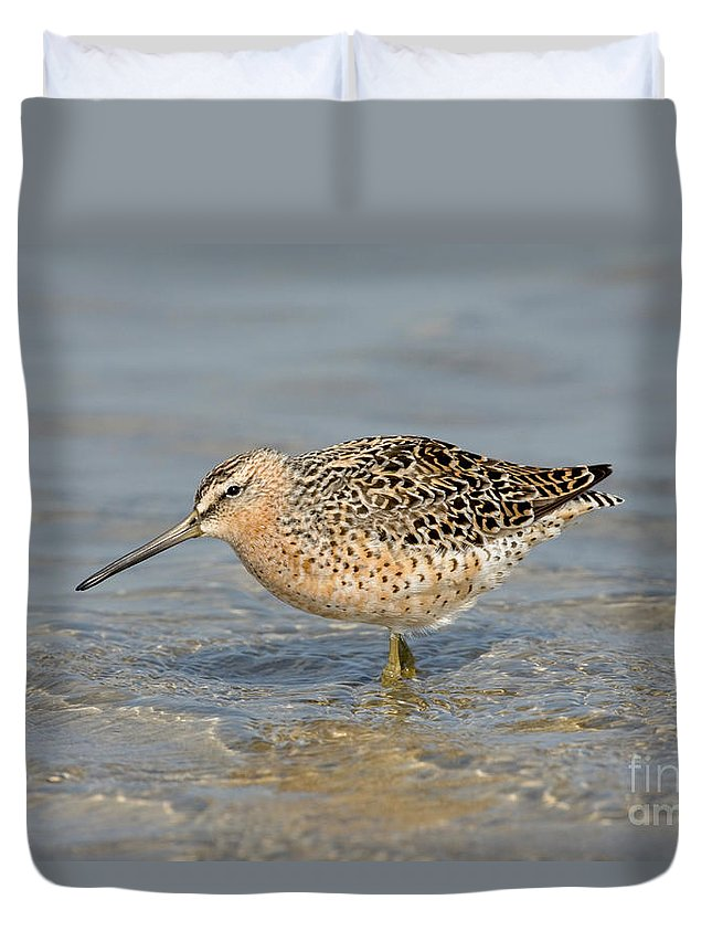 Animal Duvet Cover featuring the photograph Short-billed Dowitcher, Breeding by Anthony Mercieca