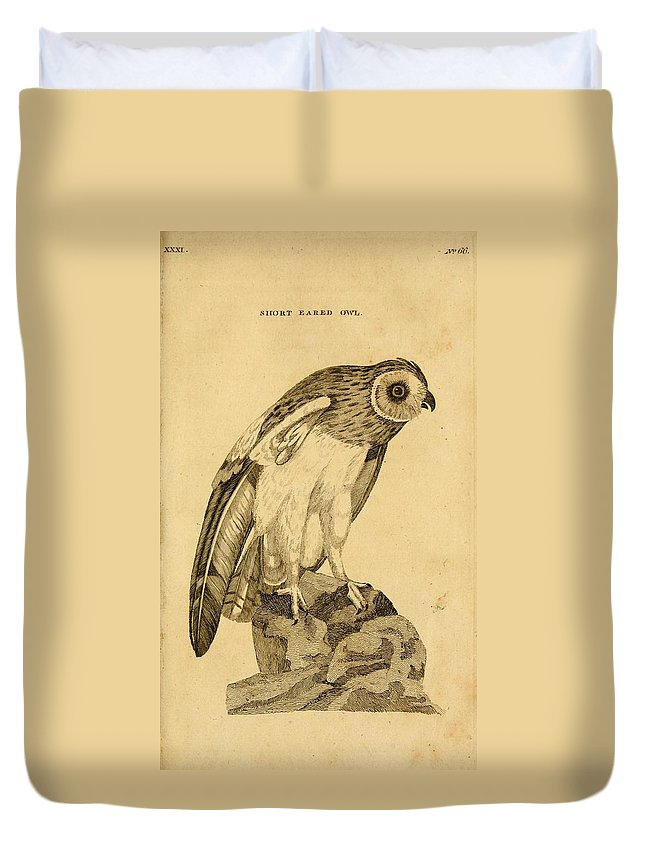 Short-eared Duvet Cover featuring the painting Short-eared Owl by Philip Ralley