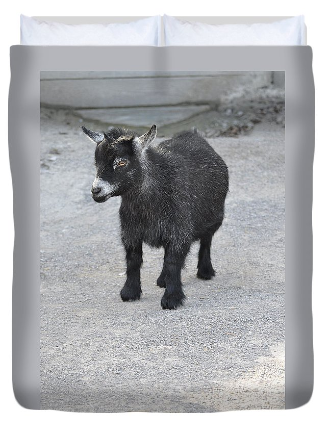 Animals Duvet Cover featuring the photograph Shorty by Jan Amiss Photography