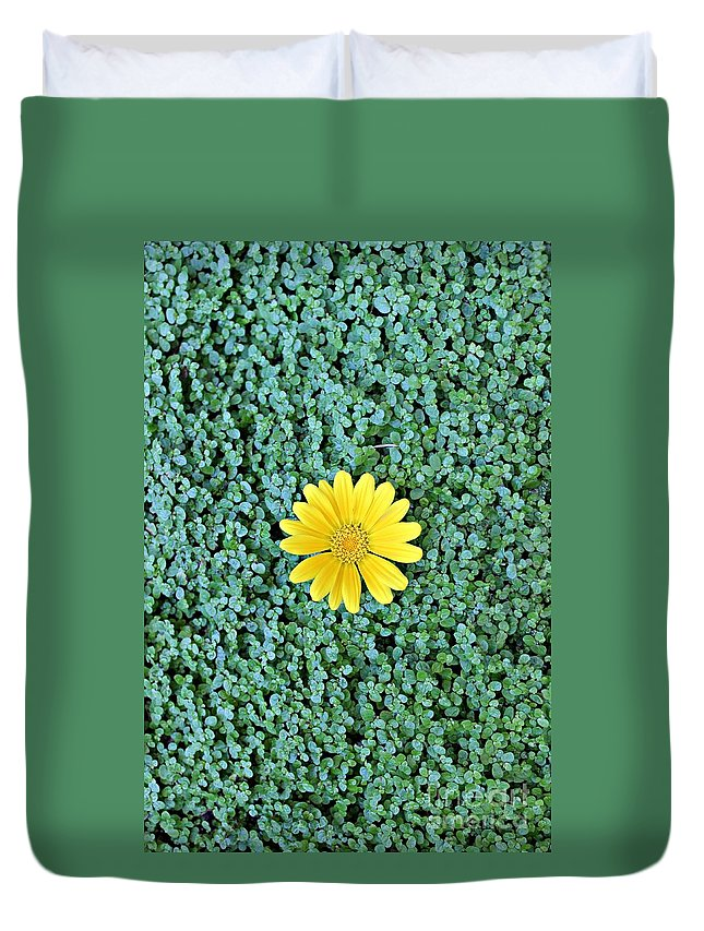 Sunflower Duvet Cover featuring the photograph Show Off by Clare Bevan