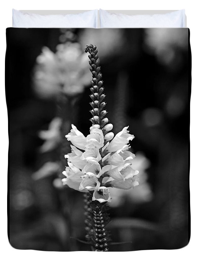 Floral Duvet Cover featuring the photograph Obedient Plant In Black And White by Debbie Oppermann