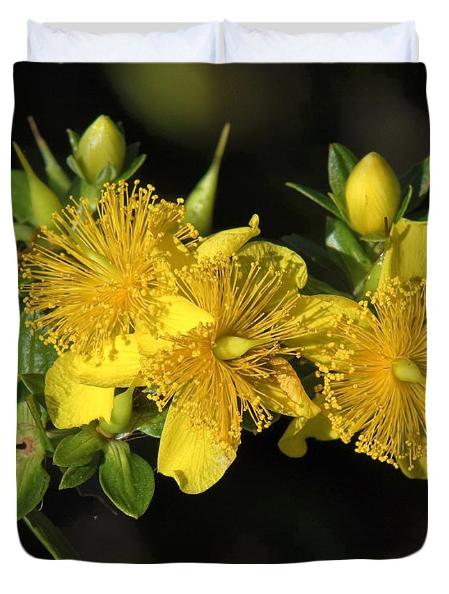 Nature Duvet Cover featuring the photograph Shrubby St Johnswort Dsmf094 by Gerry Gantt
