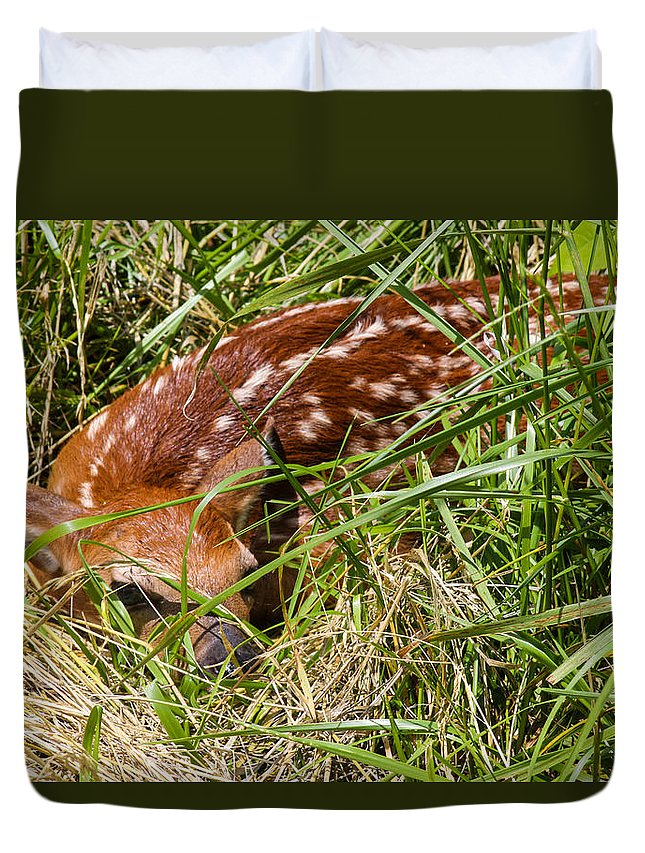 Fawn Duvet Cover featuring the photograph Shy Fawn In Meadow by Harold Hopkins