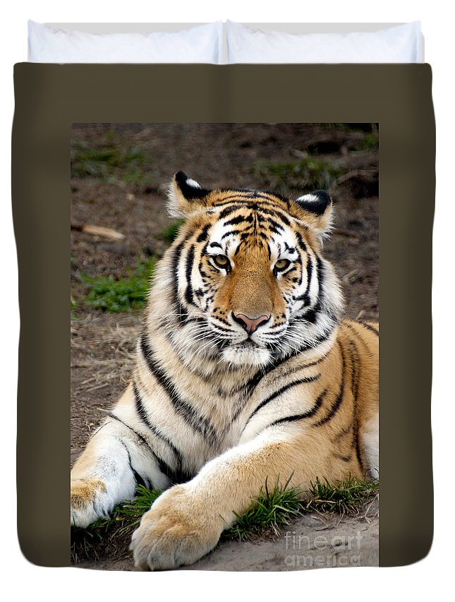 Siberian Tiger Duvet Cover featuring the photograph Siberian Tiger by Anthony Totah