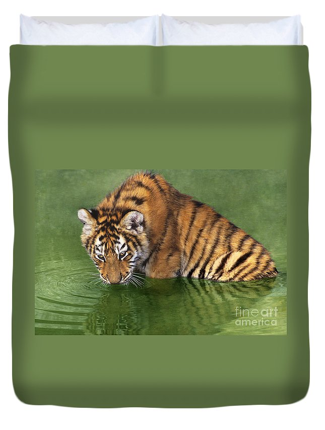 Siberian Tiger Duvet Cover featuring the photograph Siberian Tiger Cub In Pond Endangered Species Wildlife Rescue by Dave Welling