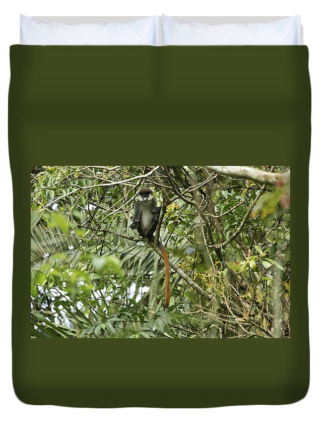 Making A Face Duvet Cover featuring the photograph Silly Red-tailed Monkey by Brian Kamprath