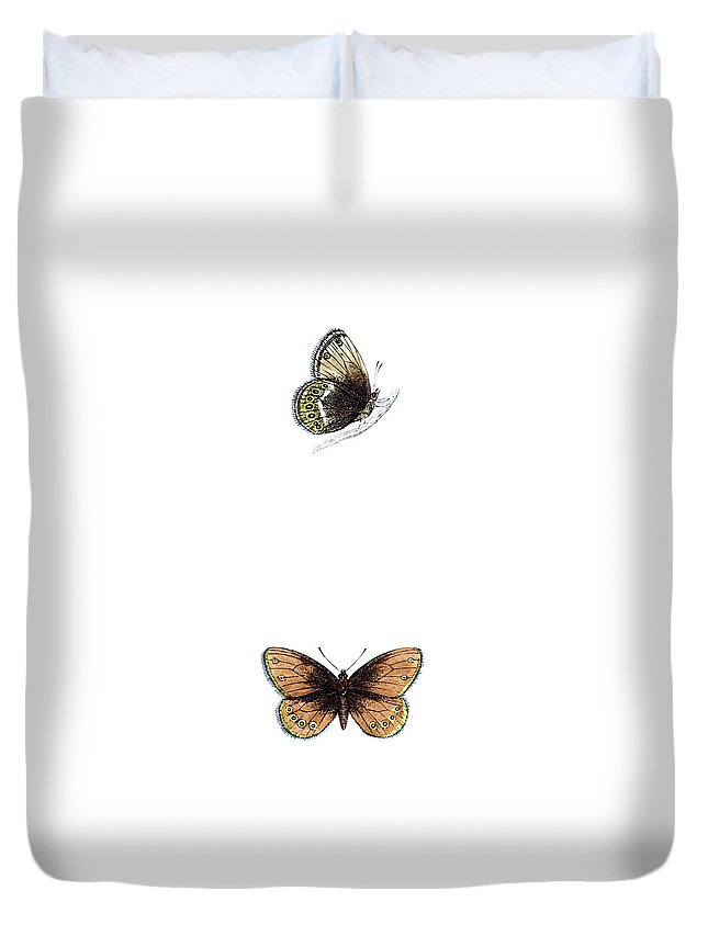 Engraving Duvet Cover featuring the photograph Silver Bordered Ringlet - Hand Coloured by Andrew howe