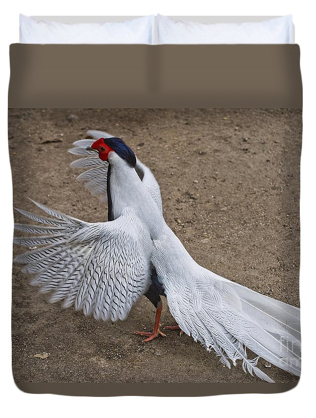 Silver Pheasant Duvet Cover featuring the photograph Silver Pheasant by Anthony Mercieca