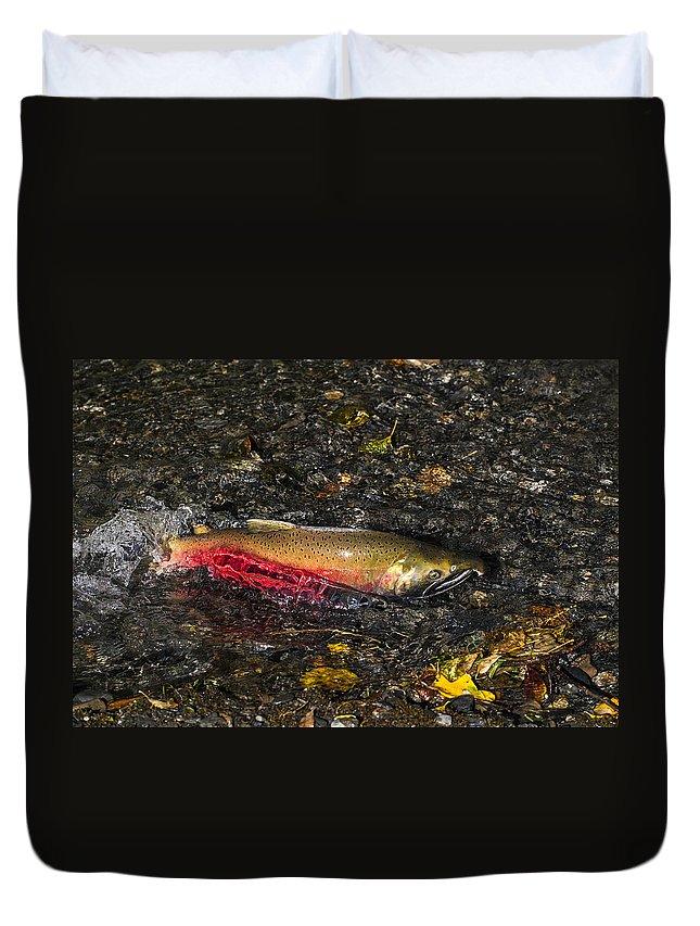 Doug Lloyd Duvet Cover featuring the photograph Silver Salmon Spawning by Doug Lloyd