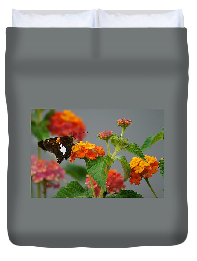 Silver-spotted Skipper Duvet Cover featuring the photograph Silver-spotted Skipper Butterfly On Lantana Blossoms by Kathy Clark