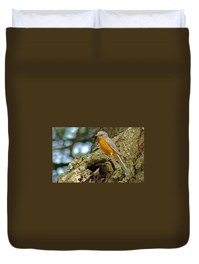 Silverbird Duvet Cover featuring the photograph Silverbird by Tony Murtagh