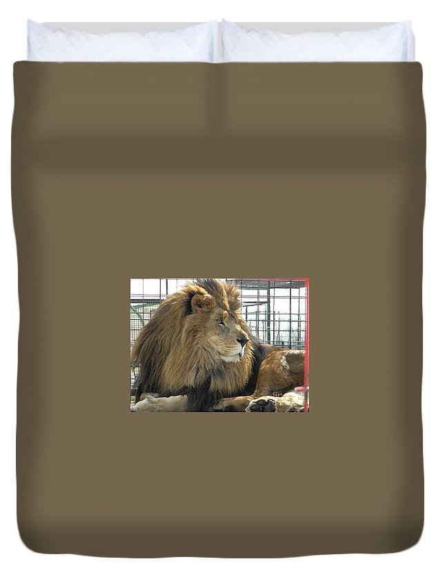 Lion Duvet Cover featuring the photograph Simon by Nathanael Smith