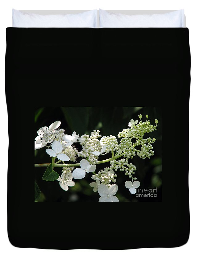 Hydrangea Duvet Cover featuring the photograph Simply by Amanda Barcon