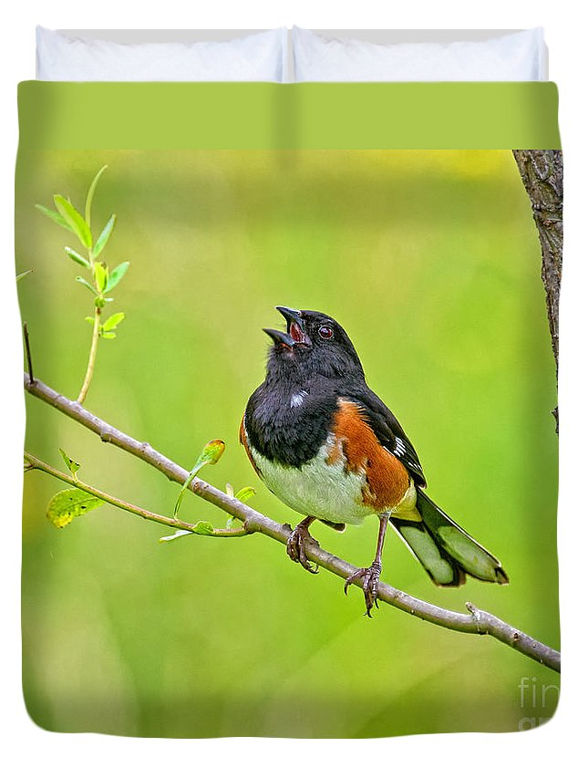 Eastern Towhee Duvet Cover featuring the photograph Singing Eastern Towhee by Timothy Flanigan