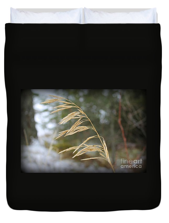 Grass Duvet Cover featuring the photograph Single Stalk by Leone Lund