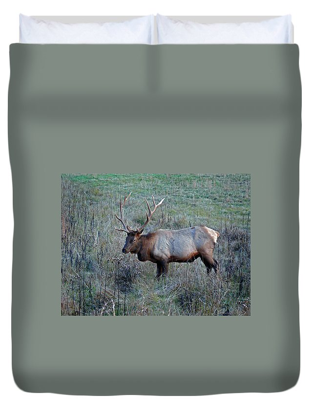 Elk Duvet Cover featuring the photograph Six By Six by Skip Willits