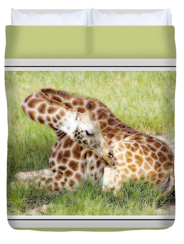 Giraffe Duvet Cover featuring the photograph Sleeping Giraffe by Alice Gipson