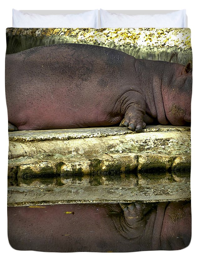 Nature Duvet Cover featuring the photograph Sleeping Hipo Reflects by Dennis Tyler