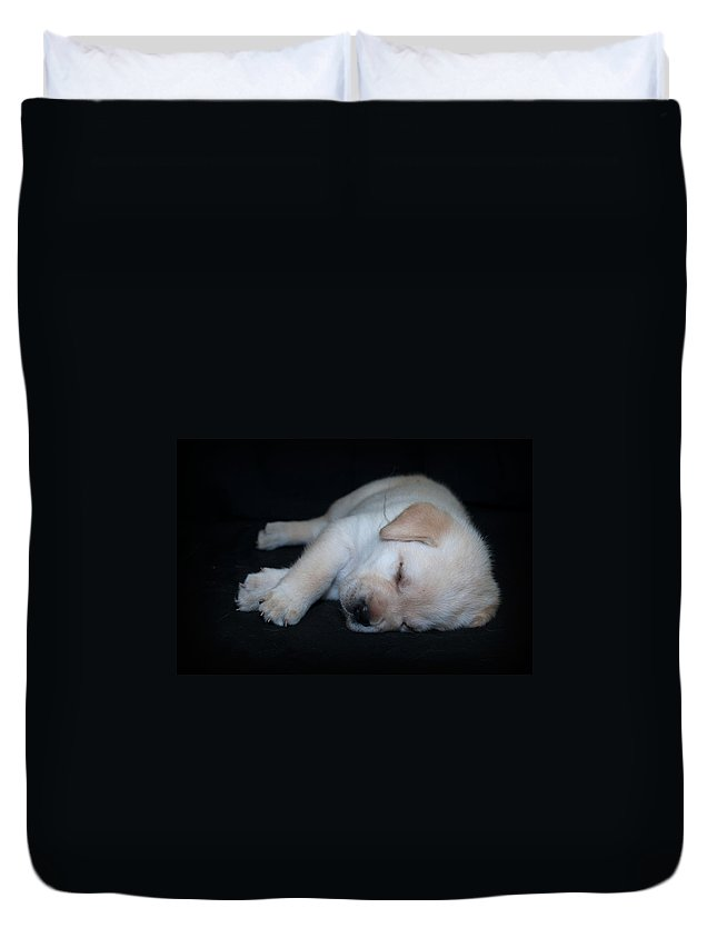 Lab Duvet Cover featuring the photograph Sleeping Puppy by Photos By Cassandra