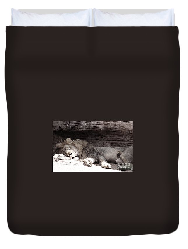 Lions Duvet Cover featuring the photograph Sleepy Beauty by Andrea Anderegg