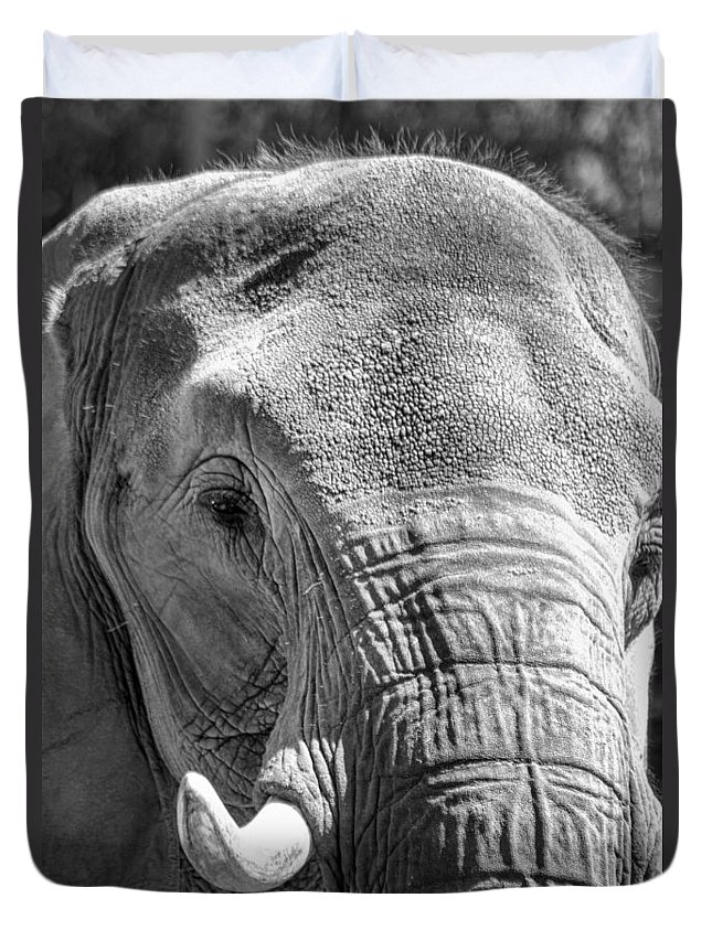Elephant Duvet Cover featuring the photograph Sleepy Elephant Lady Black And White by Kathy Clark