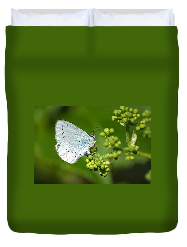 Butterfly Duvet Cover featuring the photograph Small Blue Butterfly by Chris Day