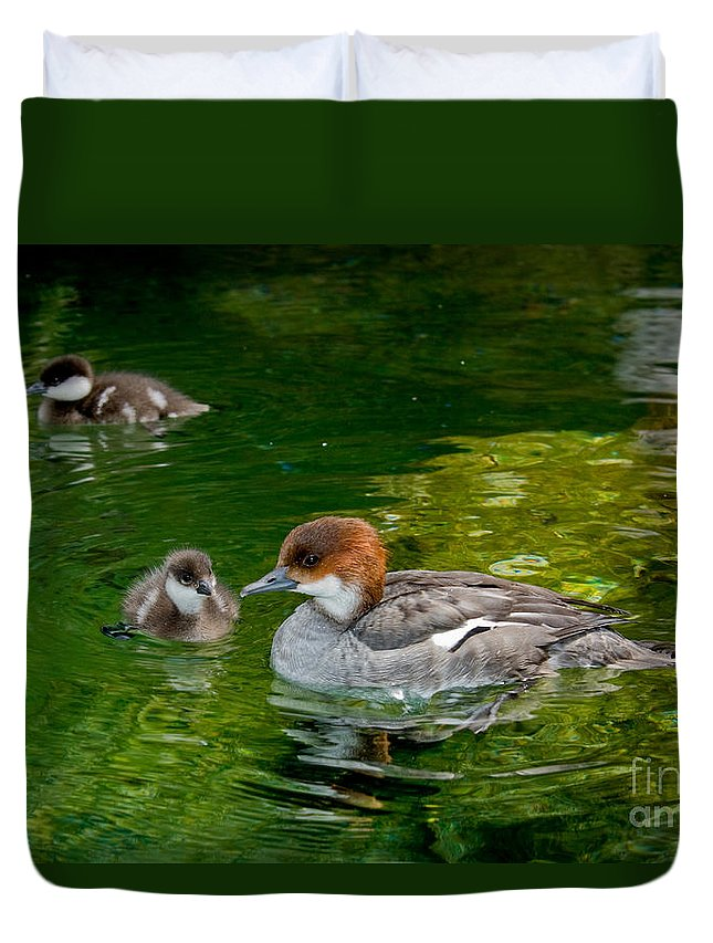 Fauna Duvet Cover featuring the photograph Smew With Ducklings by Anthony Mercieca