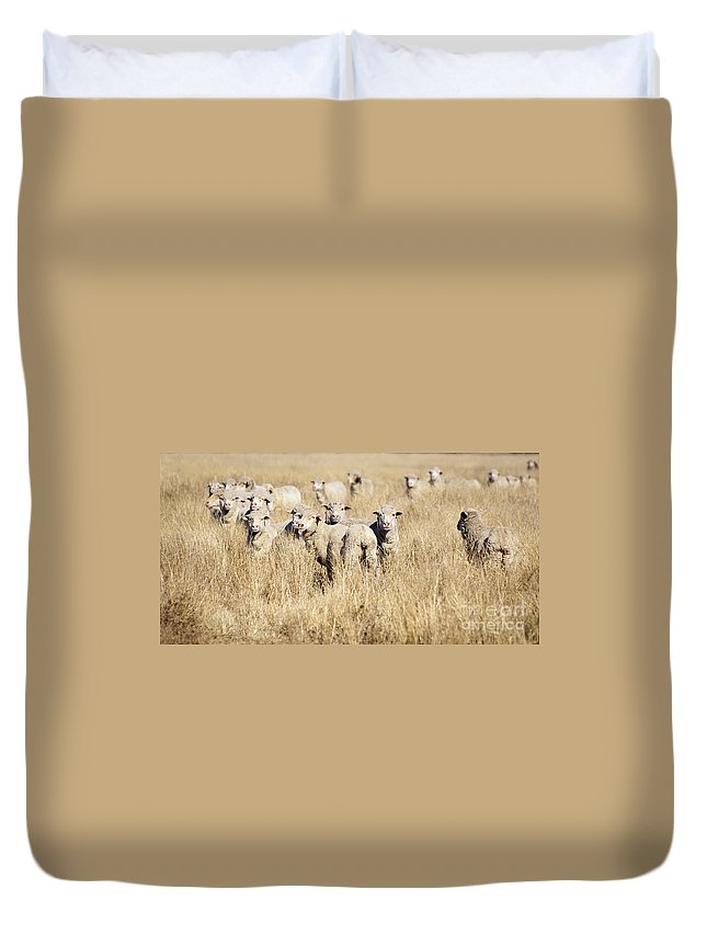 Farm Duvet Cover featuring the photograph Smiling Sheep by Tim Hester
