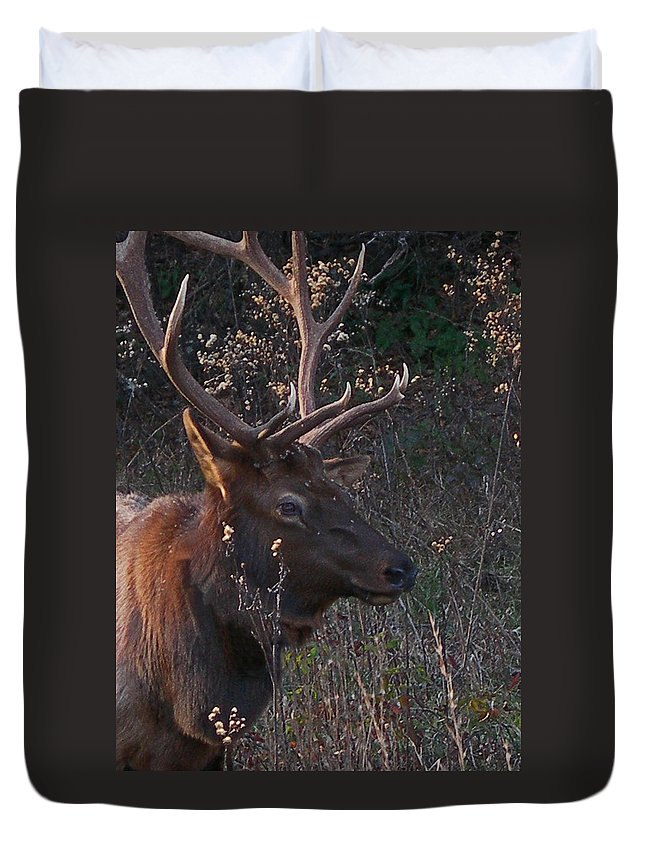 Elk Duvet Cover featuring the photograph Smoky Bull by Skip Willits