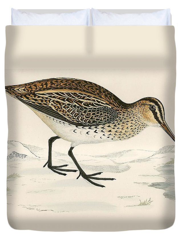 Birds Duvet Cover featuring the photograph Snipe by Beverley R. Morris