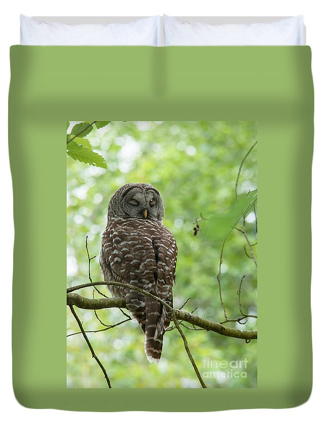 Sleeping Duvet Cover featuring the photograph Snooze Time - Owl by Rod Wiens