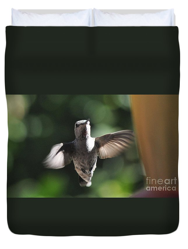 Hummingbird Duvet Cover featuring the photograph Snow Angel Young Hummer by Jay Milo