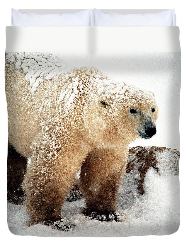 Polar Bear Duvet Cover featuring the digital art Snow Bear by Alice Ramirez
