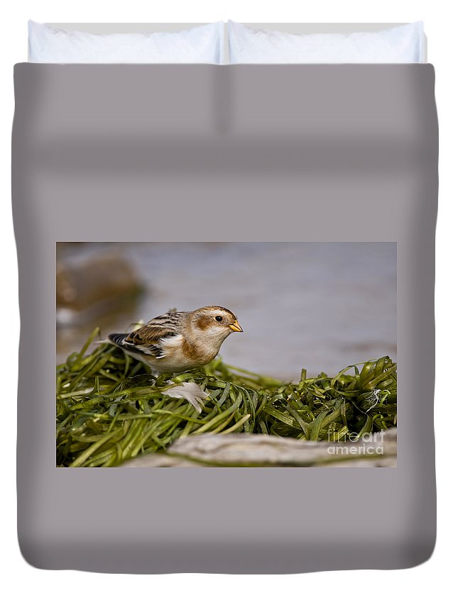 Snow Bunting Duvet Cover featuring the photograph Snow Bunting Pictures 87 by World Wildlife Photography