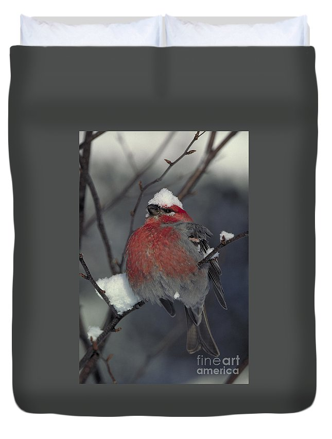 Pine Grosbeak Duvet Cover featuring the photograph Snow Covered Pine Grosbeak by Stephen J Krasemann