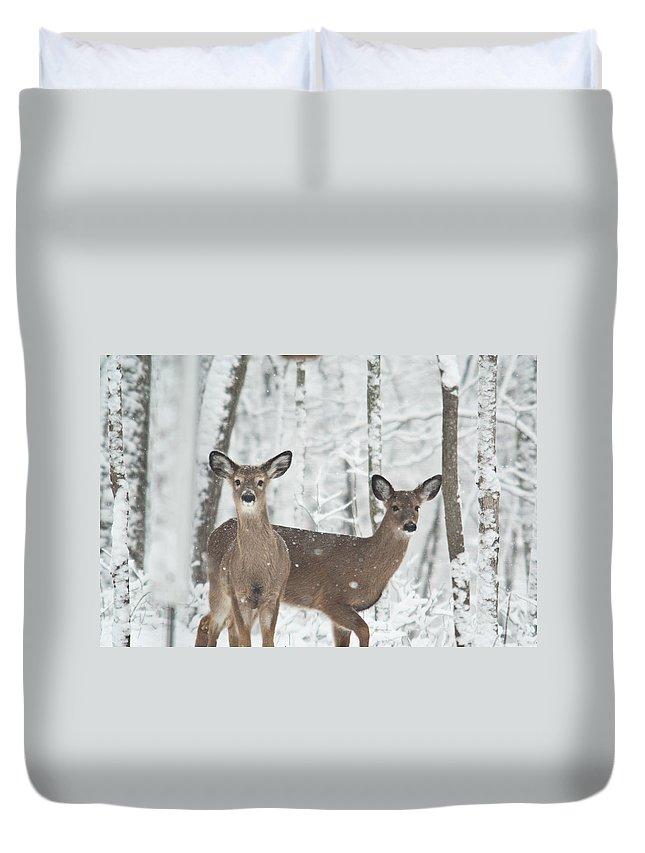 Deer Duvet Cover featuring the photograph Snow Deer by Douglas Barnett